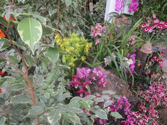 Orchideenausstellung in Frankfurt im Palmengarten 2016 Img_0383