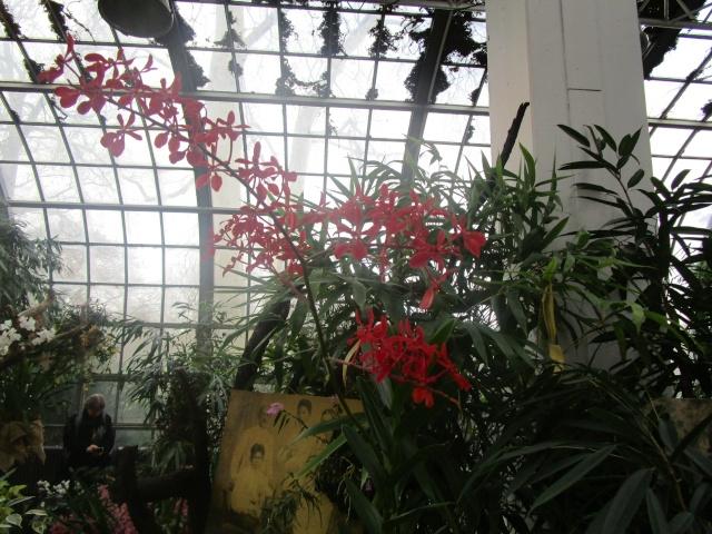 Orchideenausstellung in Frankfurt im Palmengarten 2016 Img_0385