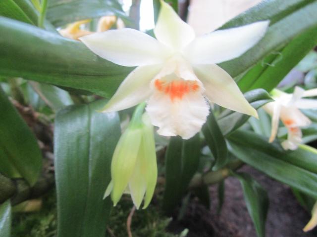 Orchideenausstellung in Frankfurt im Palmengarten 2016 Img_0387