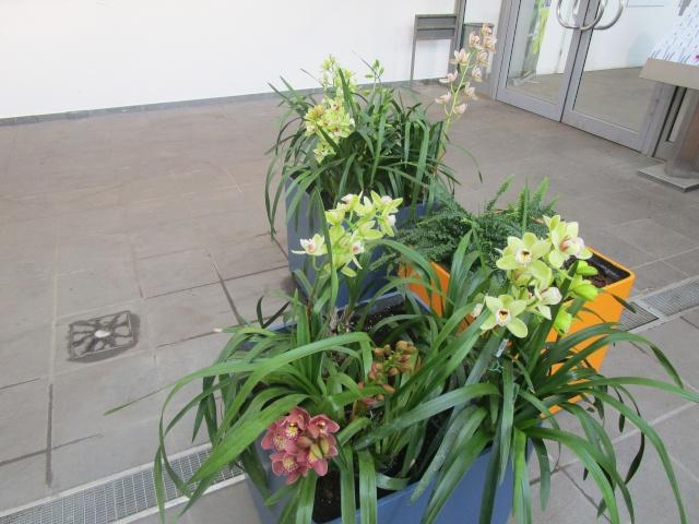 Orchideenausstellung in Frankfurt im Palmengarten 2016 Img_0419