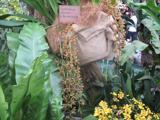 Orchideenausstellung in Frankfurt im Palmengarten 2016 Img_0426