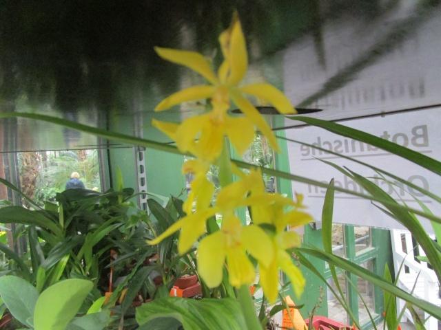 Orchideenausstellung in Frankfurt im Palmengarten 2016 Img_0431