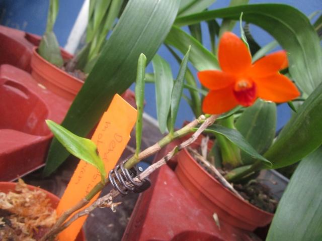 Orchideenausstellung in Frankfurt im Palmengarten 2016 Img_0433