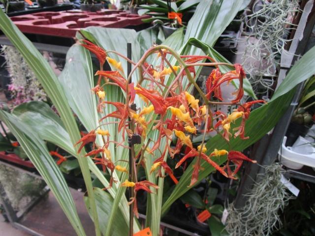 Orchideenausstellung in Frankfurt im Palmengarten 2016 Img_0436