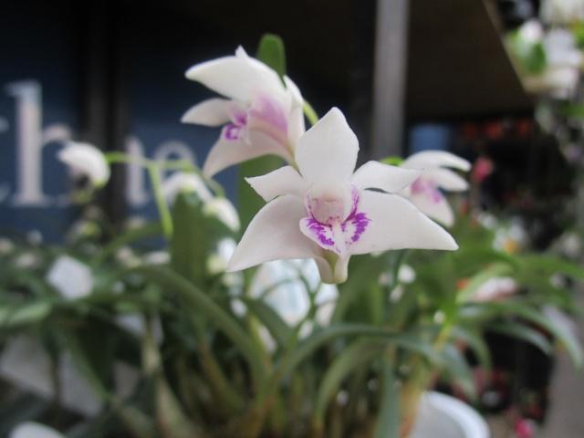 Orchideenausstellung in Frankfurt im Palmengarten 2016 Img_0437