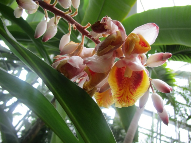 Orchideenausstellung in Frankfurt im Palmengarten 2016 Img_0442