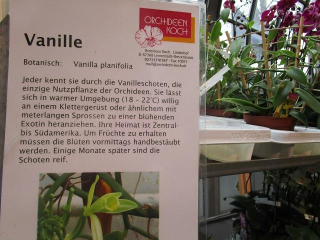 Orchideenausstellung in Frankfurt im Palmengarten 2016 Img_0443