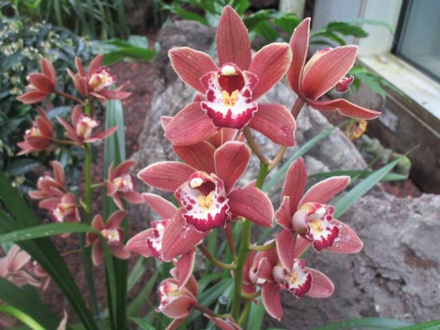 Orchideenausstellung in Frankfurt im Palmengarten 2016 Img_0445