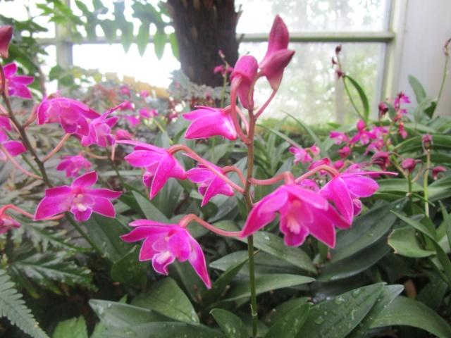 Orchideenausstellung in Frankfurt im Palmengarten 2016 Img_0448