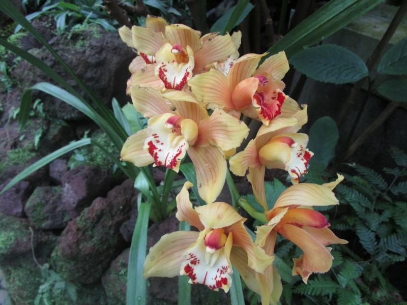 Orchideenausstellung in Frankfurt im Palmengarten 2016 - Seite 2 Img_0452