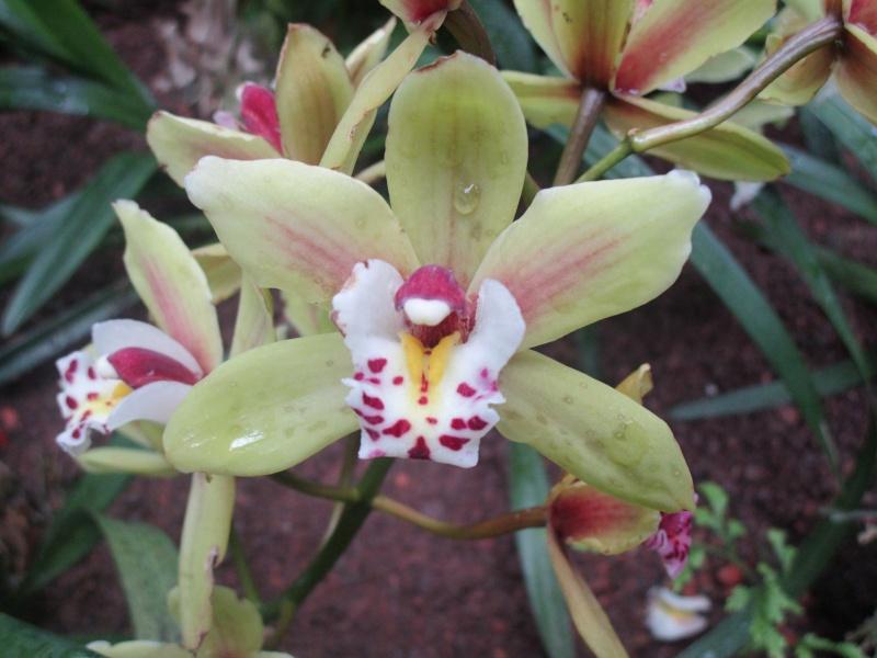 Orchideenausstellung in Frankfurt im Palmengarten 2016 - Seite 2 Img_0453