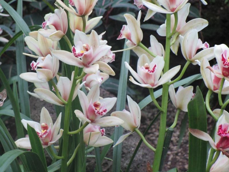 Orchideenausstellung in Frankfurt im Palmengarten 2016 - Seite 2 Img_0454