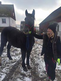 (Dept 87) FONZY DES FONTS - Percheron PP sauvé par Amanda en SUEDE!! (Janvier 2016) 12788110