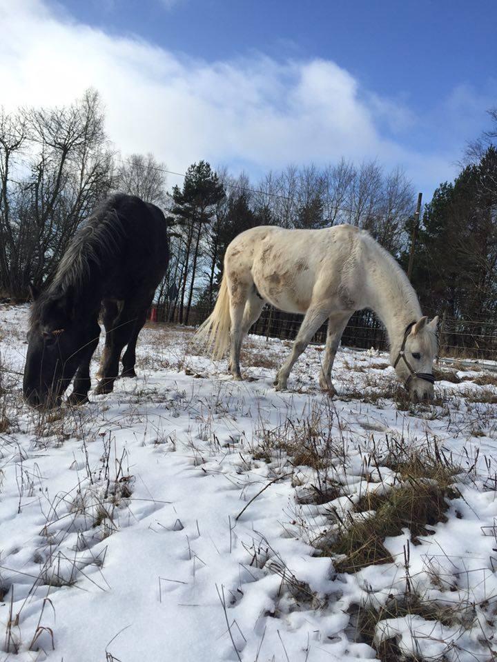 (Dept 87) FONZY DES FONTS - Percheron PP sauvé par Amanda en SUEDE!! (Janvier 2016) 12788210