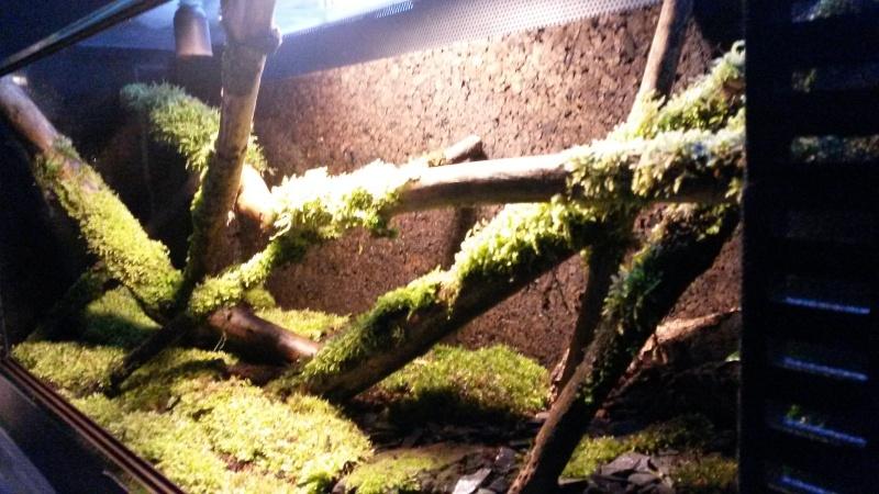 Terrarium pour Lygodactylus williamsi 20160313