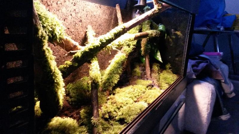 Terrarium pour Lygodactylus williamsi 20160315