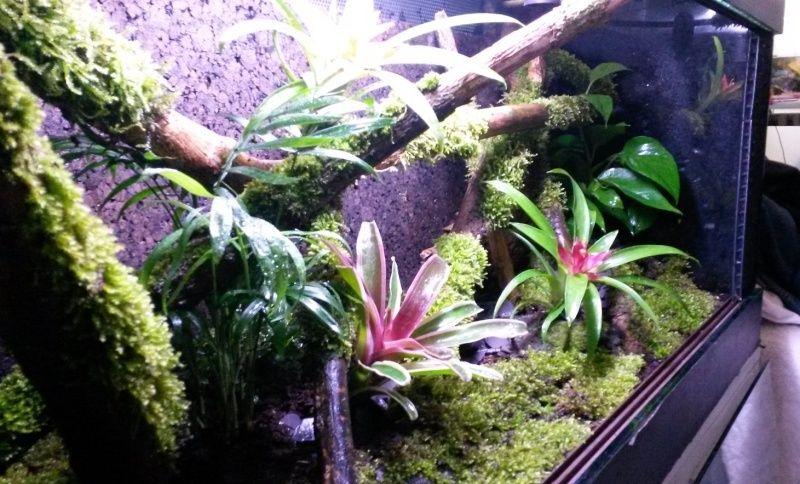 Terrarium pour Lygodactylus williamsi Sans_t11