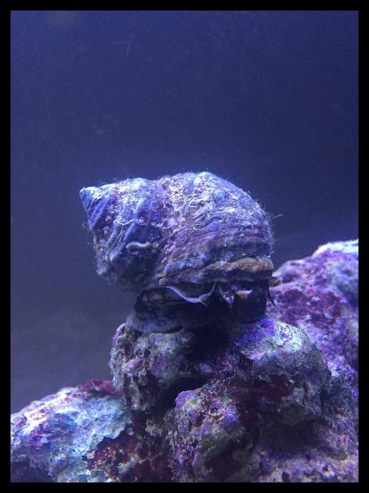 Bac de Mamsk - Reef plasma - Page 7 12735910
