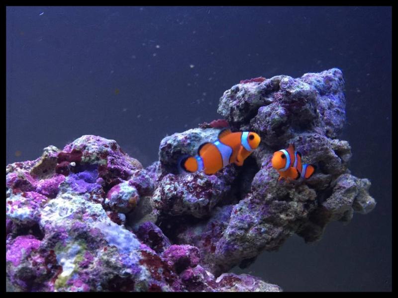 Bac de Mamsk - Reef plasma - Page 7 12765510