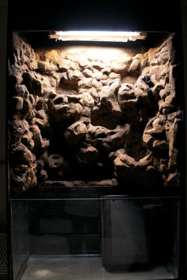 MON PALUDARIUM AMAZONIEN Dsc_1211