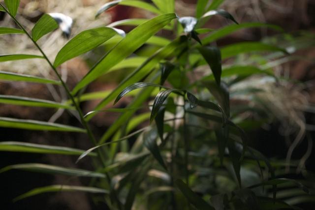 MON PALUDARIUM AMAZONIEN Dsc_1220