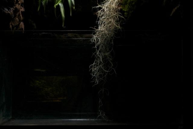 Paludarium amazonien  Dsc_1222