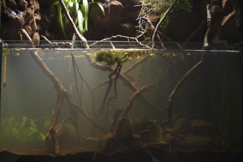 Paludarium amazonien  Dsc_1344