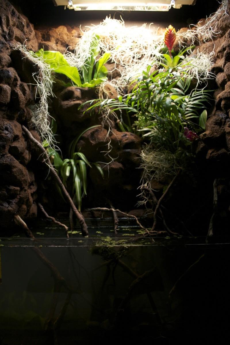 MON PALUDARIUM AMAZONIEN Dsc_1346