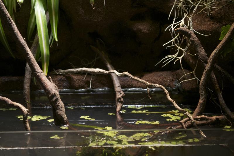 Paludarium amazonien  Dsc_1350