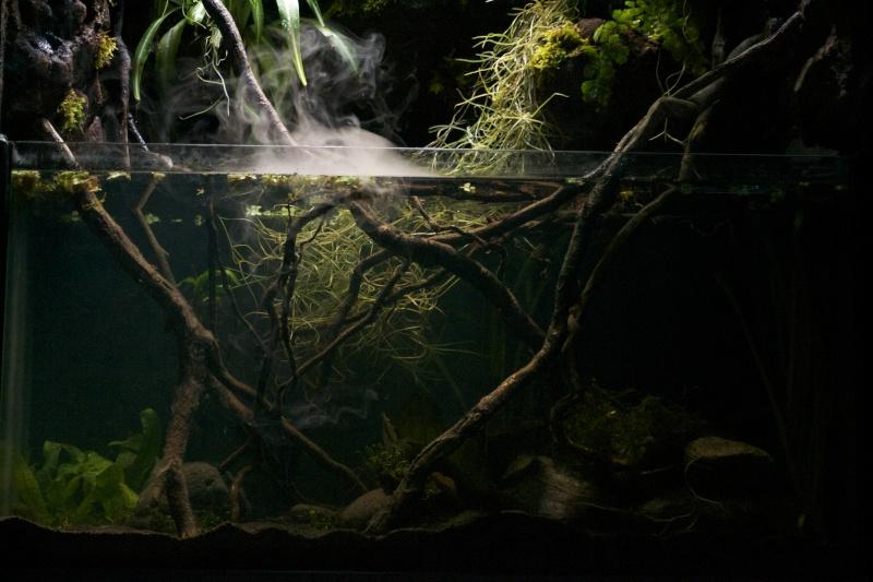 Paludarium amazonien  Dsc_2029