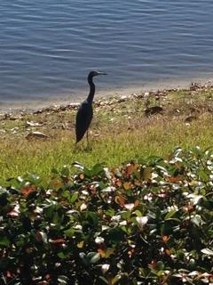 Vu en Floride Image34