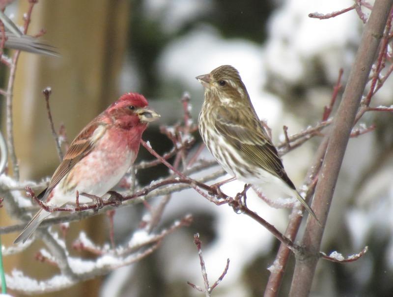 Quelques visiteurs de la journée... Image88