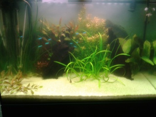 Aquarium 130l  20160214