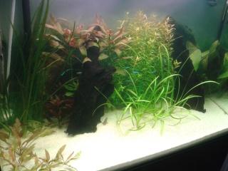 Aquarium 130l  20160312