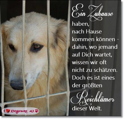 Tierschutzhunden Eingewöhnung erleichtern Ein_zu11