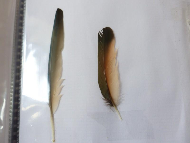 ma collection de plumes ! P1470411