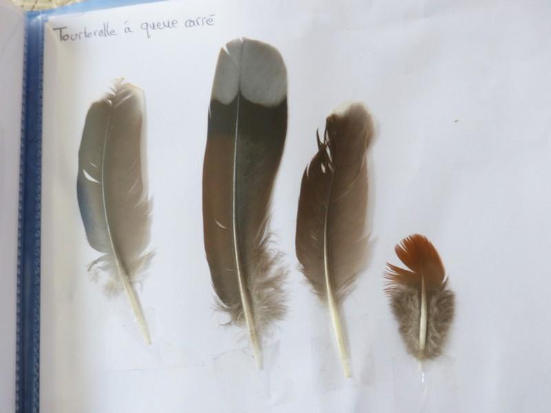 ma collection de plumes ! P1470413