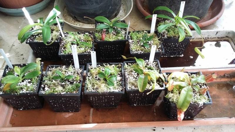 Bonjour, présentation de toutes mes plantes - Page 2 10340110