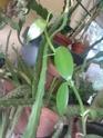 Mes plantes en hiver P2902110