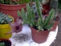 Mes plantes en hiver Photo_10