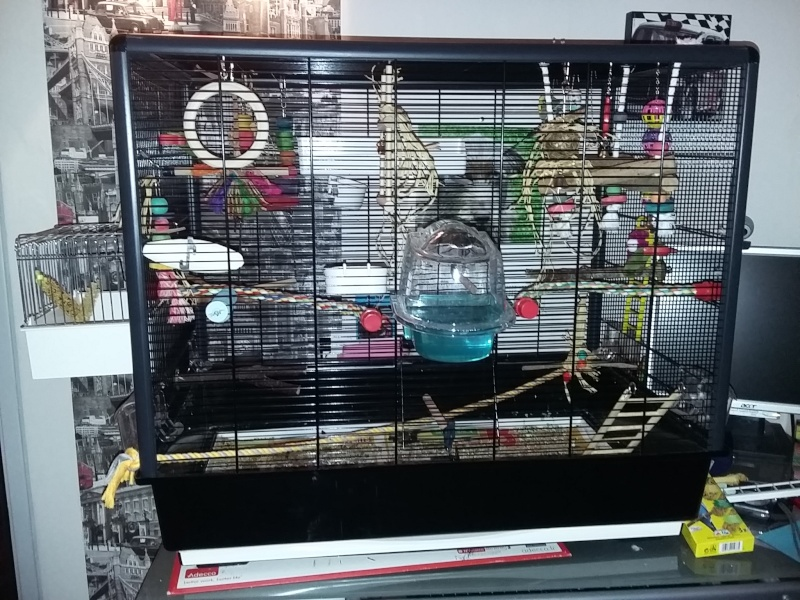 cage à vendre  Cage10