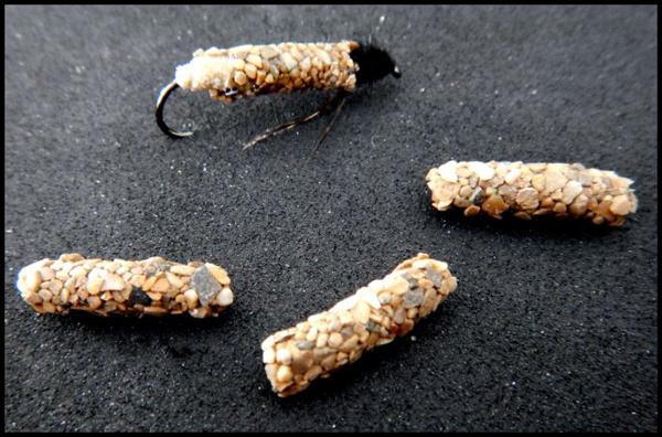 nymphe - Nymphe de larve de trichoptère: Porte bois  - Page 3 Portes10