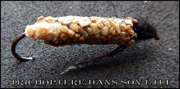 nymphe - Nymphe de larve de trichoptère: Porte bois  - Page 3 Tricho10