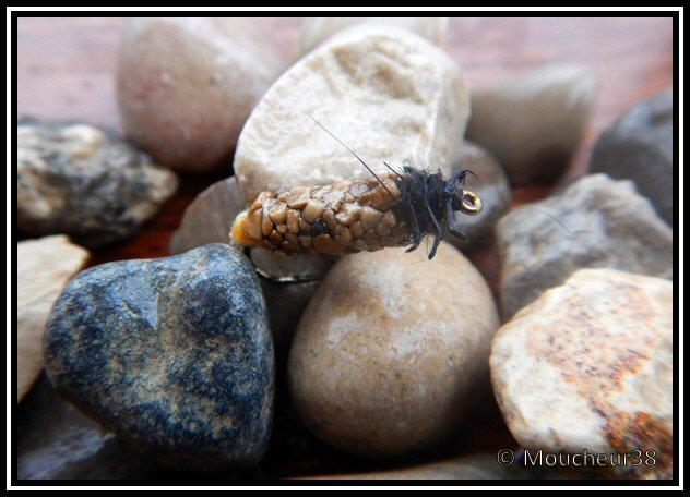 nymphe - Nymphe de larve de trichoptère: Porte bois  - Page 3 Tricho11