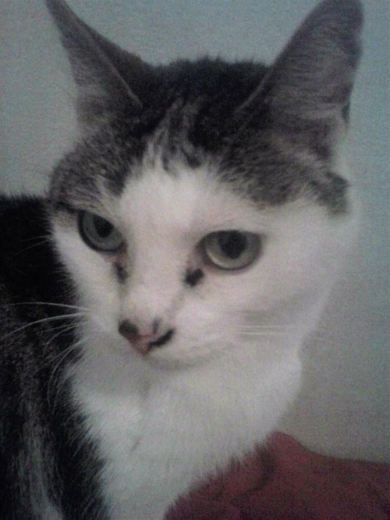 Poussy, femelle marron et blanche née le 1 juin 2002 Cam02010