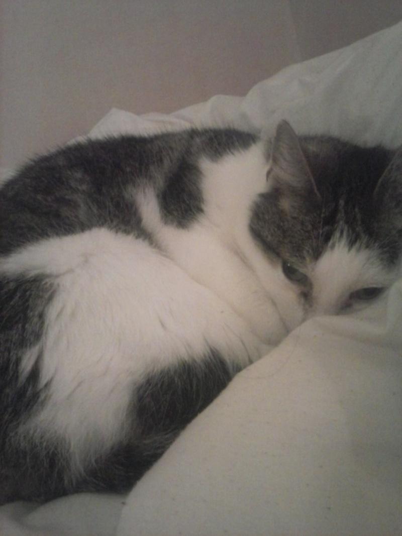 Poussy, femelle marron et blanche née le 1 juin 2002 Cam02019