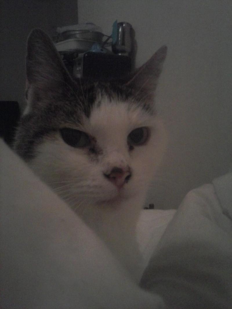 Poussy, femelle marron et blanche née le 1 juin 2002 Cam02020