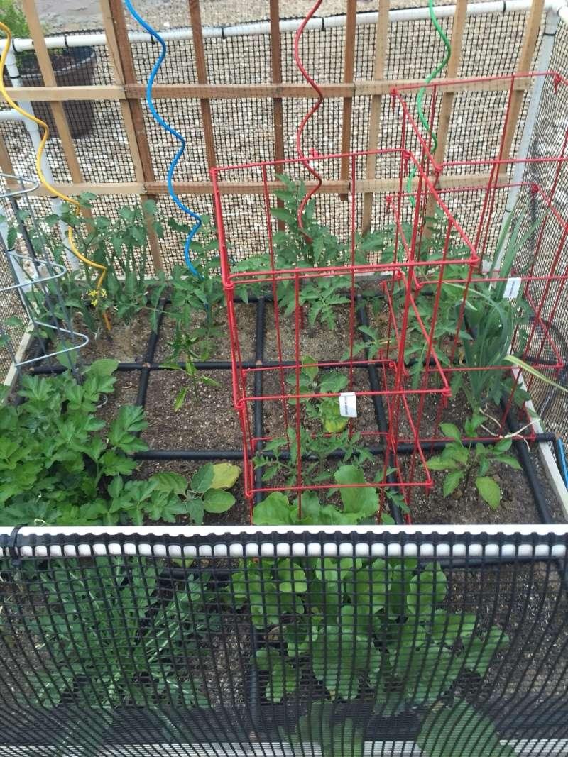 First Garden 4 x 4 Image15
