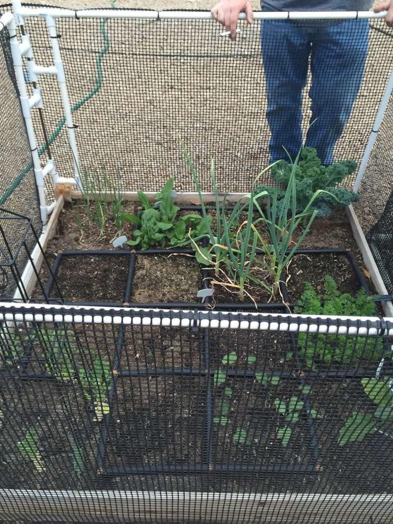 First Garden 4 x 4 Image16