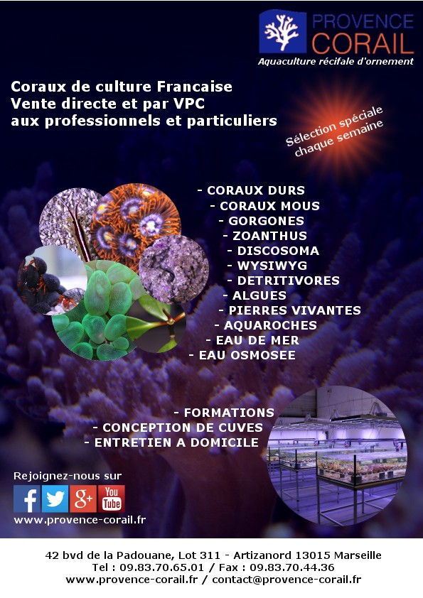 provence corail Flyer10